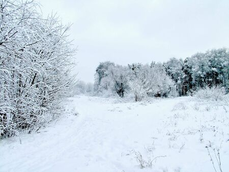 Road in the winter forest Stock Photo - 2021256