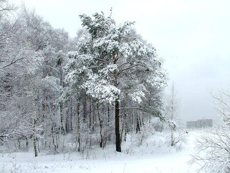 snowdrift: House after the snowdrift