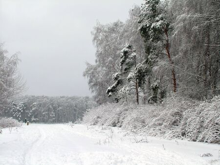 Road in the winter forest Stock Photo - 2021586