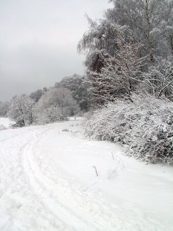 Road in the winter forest Stock Photo - 2021254