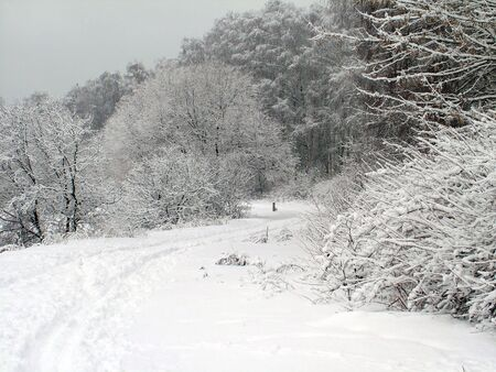 Road in the winter forest Stock Photo - 2021605