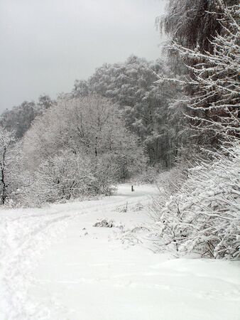 Road in the winter forest Stock Photo - 2021581