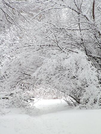Road in the winter forest Stock Photo - 2021596