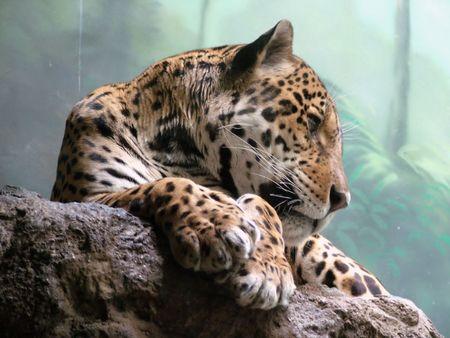 Leopard Standard-Bild