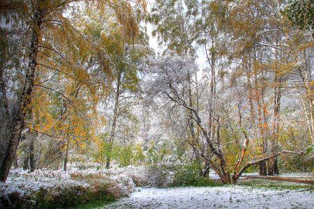 雪で覆われるそれらの木のおとぎ話の形