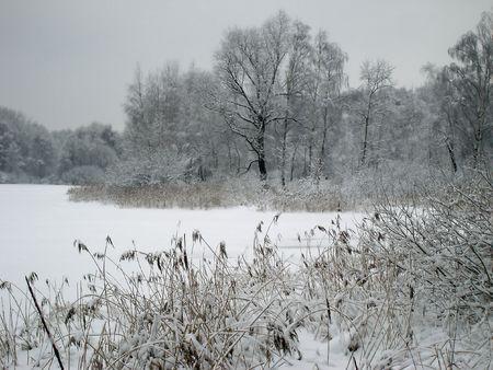 湖の岸に氷で覆われています。 写真素材