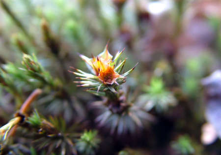 hummock: Small flower of moss on the marshy hummock Stock Photo