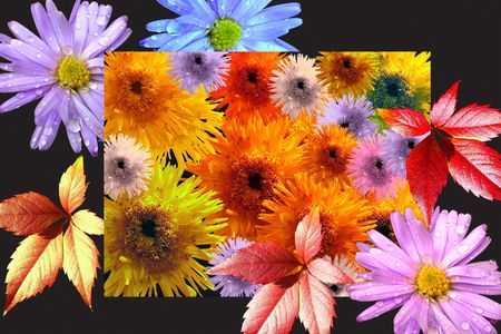 Many-colored flowers and leaves photo