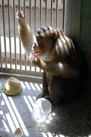 captivity: Captivity Stock Photo