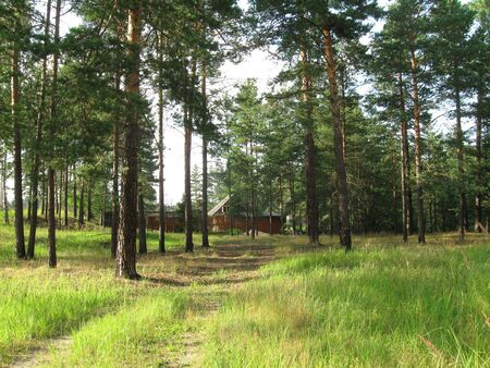 priming: Cottage in a pine the coniferous forest