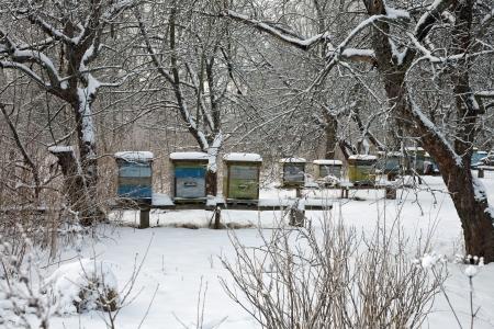 養蜂場 写真素材