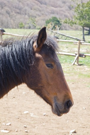 bigodes: Horse with side whiskers Imagens