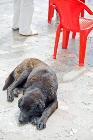 Dog near a cafe photo