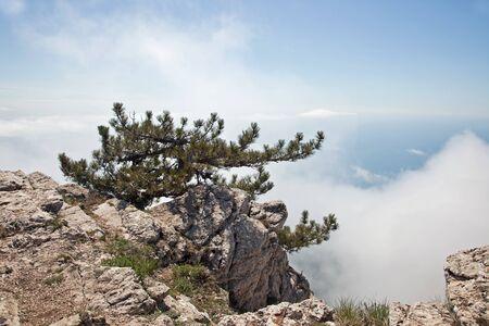 pinetree: Pine-tree on a precipice Stock Photo