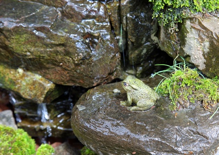 part frog: A frog is in a fountain Stock Photo