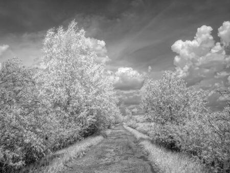 selectivity: Road