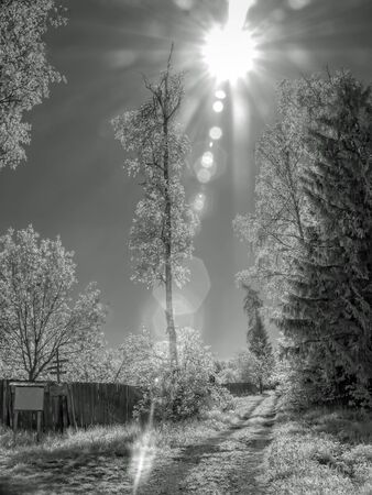 selectivity: Infrared photograph. Sun