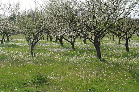 Orchard photo