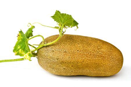 seminal: Cucumber on seed