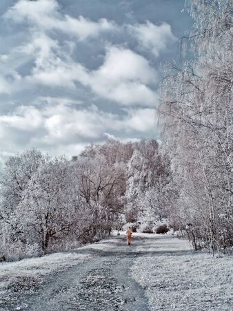 infra red: Road is in the forest, infra-red Stock Photo