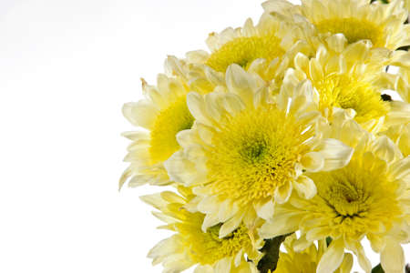 bunched: Chrysanthemum is bunched. Open composition