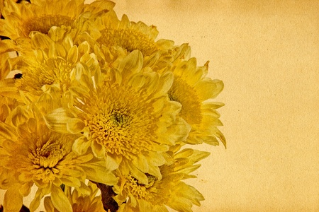 bunched: Chrysanthemum is bunched. Collage. Open composition