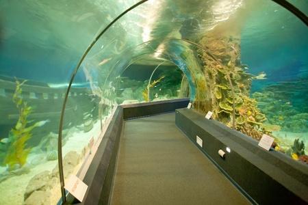 oceanarium: Oceanarium, tunnel in the enormous aquarium