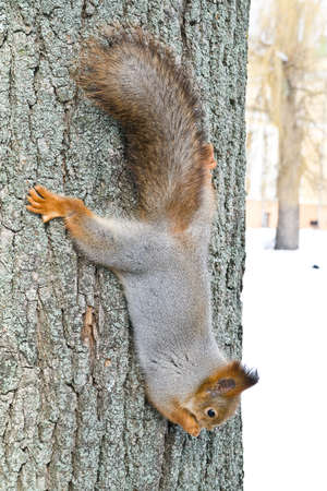 Squirrel Stock Photo - 12651178