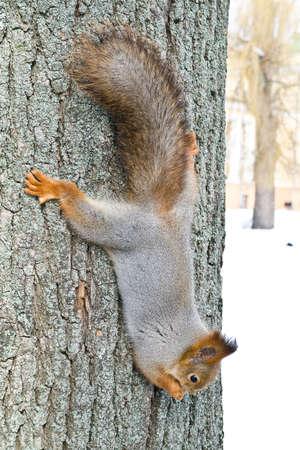 Squirrel Stock Photo - 12651178