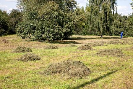 haymaking: Haymaking
