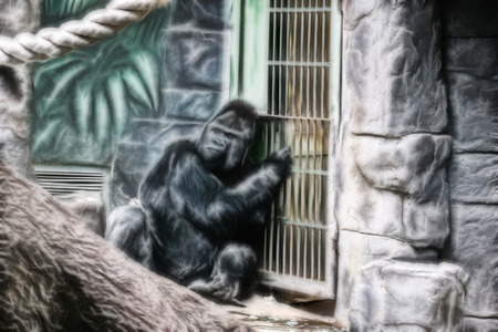 anthropomorphous: Young male of gorilla in a cage behind bars Stock Photo