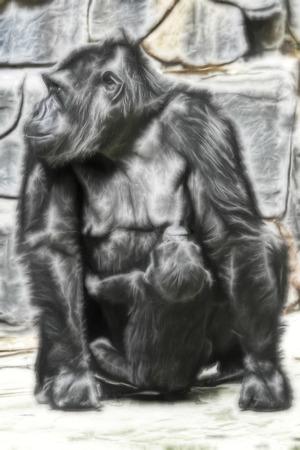 A female gorilla feed a baby photo