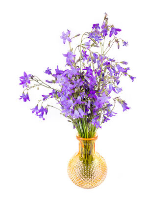 Purple campanula flowers isolated on white background photo