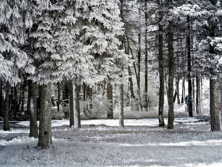 selectivity: Foliage and trees. Photo in the infrared range