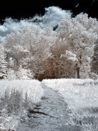 selectivity: Foliage, grass and trees. Path in the park. Photo in the infrared range Stock Photo
