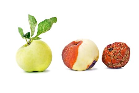 Rotten apple, apple a festering and whole normal apple is isolated on a white background photo