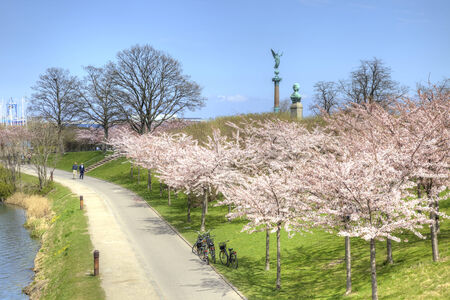 DENMARK, COPENHAGEN - May 02.2013: Flowering cherry orchard ashore channel in city