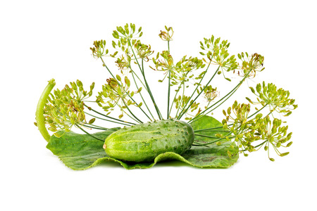 Inflorescence of dill and young cucumber are isolated on a white background Stock Photo