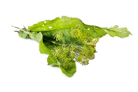 pickling: Bound by for pickling a bunch the leaves of horseradish and dill are isolated on a white background