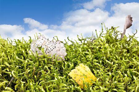 hojas antiguas: Musgo Planta con hojas viejas en un cielo de fondo