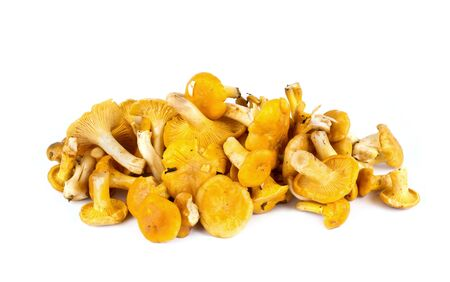 cantharellus: Yellow mushrooms of cantharellus, it is isolated on a white background