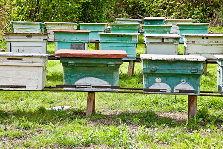 apiary: Apiary with bee beehives on the slope of mountain Stock Photo