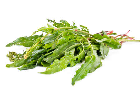 sour grass: Green leaves of garden plant sorrel sour is isolated on a white background