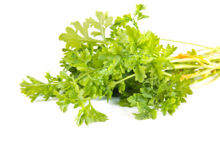 cruciferous: Plant Garden cress is isolated on a white background