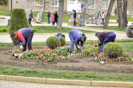 municipal utilities: KISLOVODSK, RUSSIA - April 30.2015: Municipal workers planted flowers on the flowerbed urban boulevard