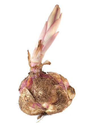 raices de plantas: Gran tubérculo maduro de la planta de lirio se encuentra aislado en un fondo blanco Foto de archivo