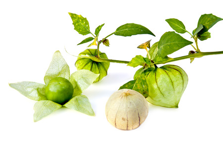 edible plant: Fruit of edible plant is a ground-cherry, it is isolated on a white background