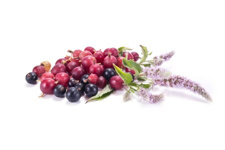blackcurrant: Blooming sprig of mint and berries of gooseberry and blackcurrant isolated on white background Stock Photo