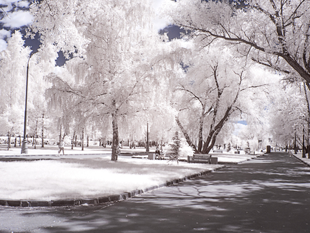City landscape. Alley in the park. Moscow city. Infrared photography
