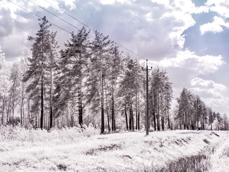 Infrared photography. Trees against the sky. Glade in the forest Stock Photo